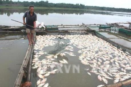 Nguyên nhân tôm hùm, cá mú chết hàng loạt tại Phú Yên