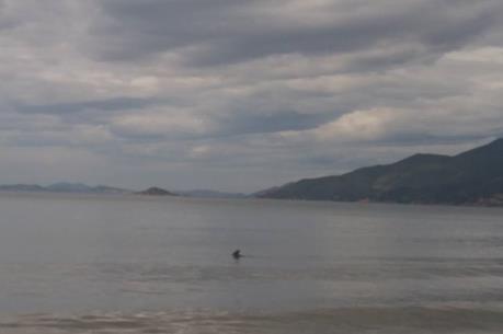 Giải cứu cá heo dạt vào bờ biển Bình Định