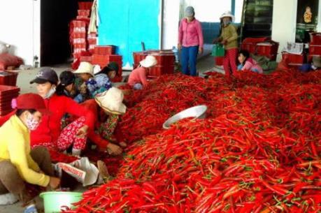 Cơ hội cho các doanh nghiệp xuất khẩu ớt của Việt Nam