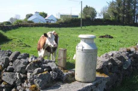 Nông dân gặp khó do EU bỏ hạn ngạch sản xuất sữa