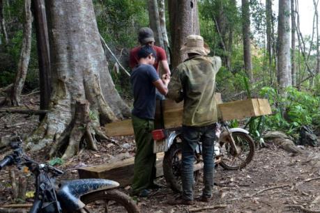 Bắt khẩn cấp đối tượng chủ mưu phá rừng, đốt Trạm quản lý bảo vệ rừng Ngọc Tụ, Kon Tum
