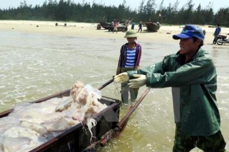 Hà Tĩnh hỗ trợ người dân vùng biển ổn định đời sống, khôi phục sản xuất