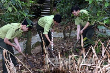 Công tác bảo vệ rừng chưa bền vững