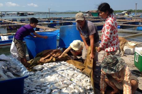 Một trên 14 doanh nghiệp xả thải gây ô nhiễm sông Chà Và chịu bồi thường