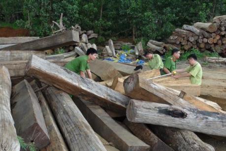 Phát hiện doanh nghiệp tàng trữ khối lượng lớn gỗ lậu
