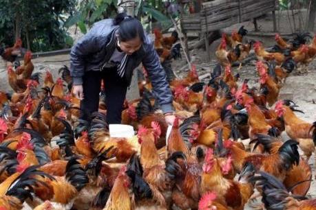 Bắc Giang triển khai 3 đề án phát triển chăn nuôi