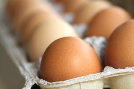 Canada phát triển kỹ thuật phát hiện giới tính trứng gà