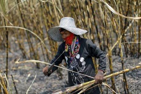 Thái Lan: Sản lượng đường giảm gần 1 triệu tấn