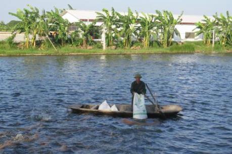 Hải Dương: Không có hiện tượng cá chết trắng sông