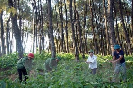 Cả nước có trên 14 triệu ha rừng