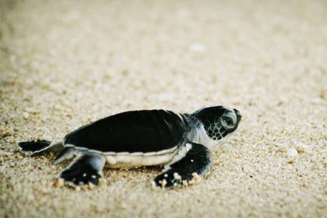 Madagascar thu giữ 260 rùa con tại sân bay quốc tế
