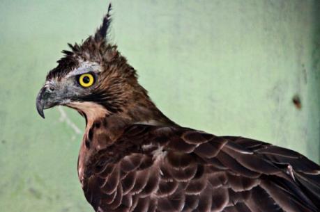 Nhiều loài chim ở Indonesia đối mặt với nguy cơ tuyệt chủng