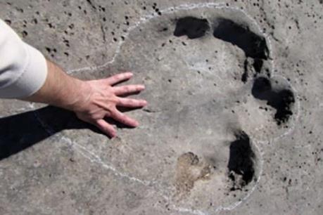Phát hiện dấu chân khủng long khổng lồ tại Bolivia