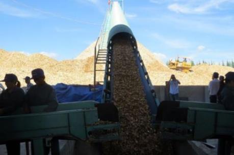 Chính thức vận hành Nhà máy chế biến nguyên liệu gỗ trị giá 100 tỷ