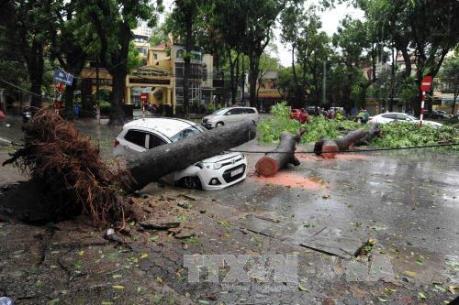 Nguyên nhân cây gẫy đổ hàng loạt trong cơn bão số 1 tại Hà Nội