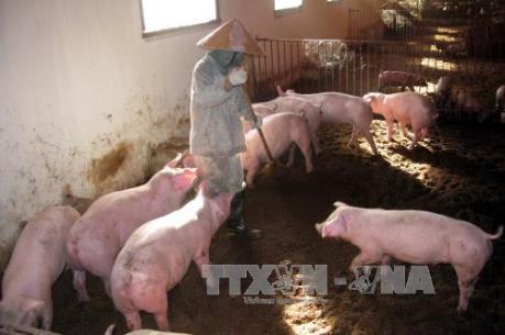 Ngưng cấp điện cho các hộ chăn nuôi gây ô nhiễm