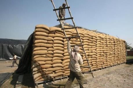 Thiếu thốn lương thực gây thiệt hại kinh tế nghiêm trọng