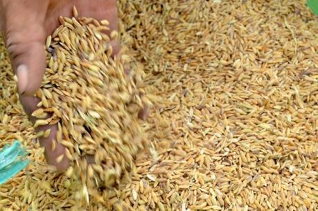 Hỗ trợ giống cây trồng cho các tỉnh bị thiệt hại do bão số 1