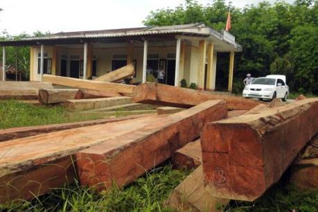"""""""Lâm tặc"""" ngang nhiên tàn phá rừng phòng hộ Vĩnh Linh"""