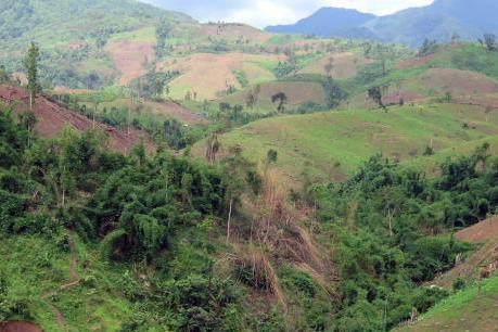 Triển khai ứng dụng theo dõi diễn biến rừng và đất lâm nghiệp