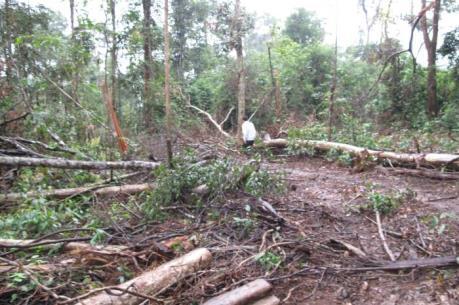 Kỷ luật 3 cán bộ bảo vệ rừng phòng hộ Nam Cát Tiên