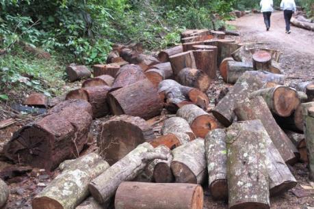 Tây Nguyên: Rừng giao khoán cho cộng đồng vẫn bị phá, lấn chiếm trái phép