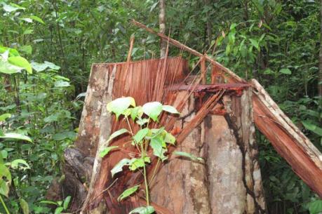 Tan hoang rừng phòng hộ Tây Nguyên