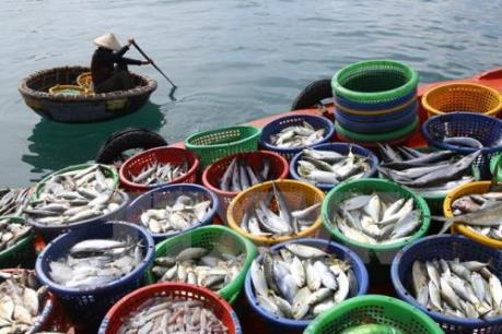 Kiên Giang nguồn lợi thủy sản ngày càng suy giảm