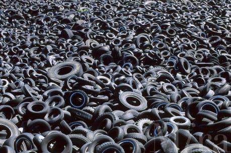 Ninh Bình: Hoạt động của nhà máy thuộc Công ty Hạ Long không gây ô nhiễm môi trường