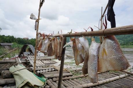 Cá chết hàng loạt trên sông Mã là do mưa lũ cuốn nhiều phù sa