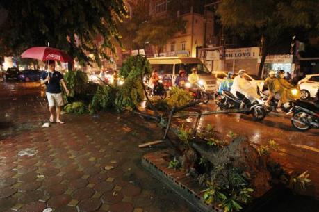 Ứng phó với bão số 3: Đề phòng nguy cơ cây xanh bị gãy đổ do bão