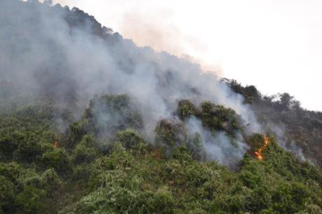 Cơ bản khống chế vụ cháy lớn tại rừng Nam Hải Vân, Đà Nẵng