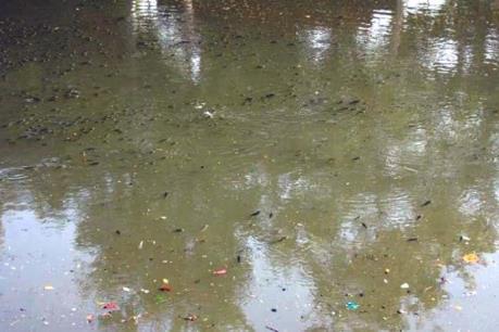 Nguyên nhân ban đầu cá chết nổi trắng sông An Cựu, Huế