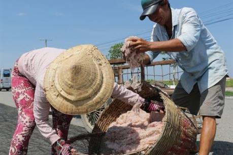 Ngư dân Quảng Bình thu tiền triệu mỗi ngày từ khai thác ruốc biển