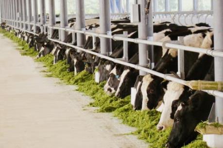 Vinamilk: Thương hiệu sữa Việt 40 năm, xuất khẩu sang 43 nước