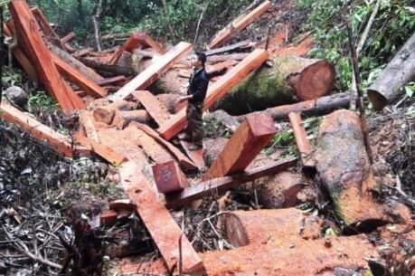 Vụ phá rừng tại Lâm trường Măng La: Đình chỉ vụ án hình sự do không cấu thành tội phạm