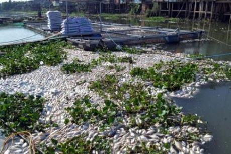 Xác định nguyên nhân cá chết hàng loạt trên sông Sa Lung