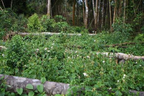 Vụ phá rừng quy mô lớn tại Đắk Nông: Cơ quan công an sẽ vào cuộc