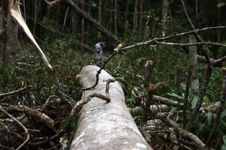 Phó Chủ tịch tỉnh Đắk Nông trực tiếp khảo sát tình trạng phá rừng từ phản ánh của TTXVN
