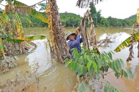 Sản xuất nông nghiệp bị ảnh ưởng lớn do thi công thủy điện