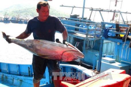 """Nghề câu cá ngừ đại dương: Ngư dân chưa hết """"lênh đênh"""""""