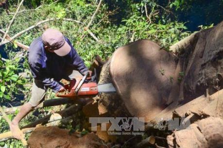 Rừng bị tàn phá, chính quyền địa phương vẫn không thừa nhận
