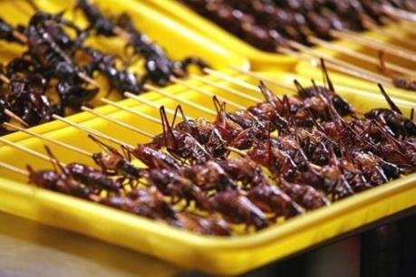 Bộ Y tế khuyến cáo người dân tuyệt đối không sử dụng côn trùng lạ làm thức ăn
