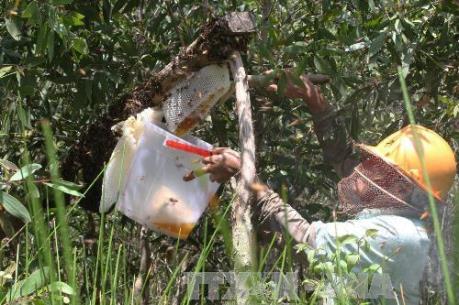 Cần tăng cường quản lý chất lượng sản phẩm mật ong U Minh Hạ