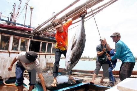 Phát triển kinh tế biển tại Huế - Bài 2: Khôi phục thế mạnh sinh thái và thủy sản