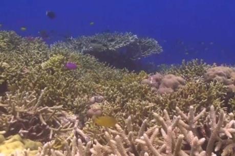 Phát hiện 15 khu vực có dải san hô ngầm phát triển mạnh trên thế giới