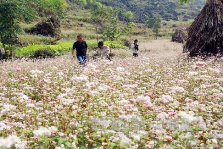 """Du lịch """"Homestay"""" ở Hà Giang: Trải nghiệm và khám phá"""