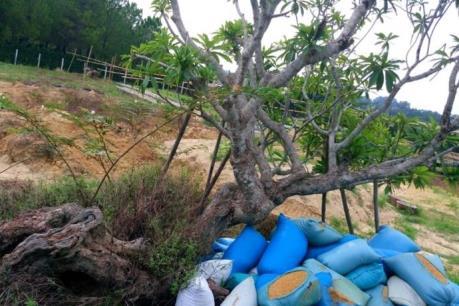Thực hư chuyện cây quý tại di tích Huế bị đào để biếu lãnh đạo