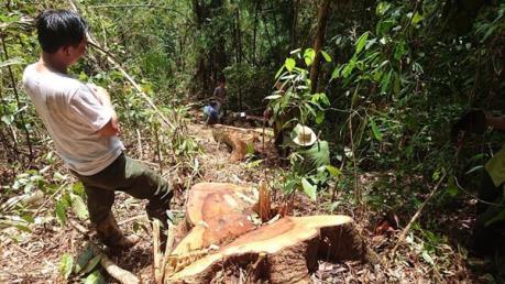 Khởi tố đối tượng cầm đầu băng nhóm phá rừng