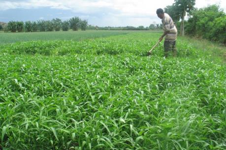 Gần 144.000 ha cây trồng cạn áp dụng tưới tiên tiến, tiết kiệm nước